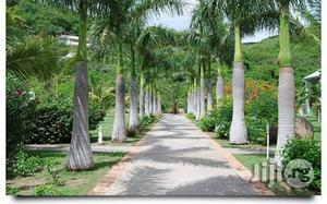 Royal Payal Palm Tree Seedlings Flowers And Ornamental Plants   Garden for sale in Plateau State, Jos