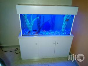 Ready Made Aquarium Now Available | Fish for sale in Lagos State, Ikeja