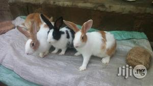 Bunnies for Sale   Livestock & Poultry for sale in Lagos State, Ikeja
