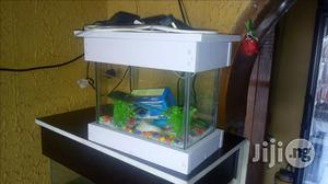 Mini Aquariums For Home And Office   Fish for sale in Lagos State, Victoria Island