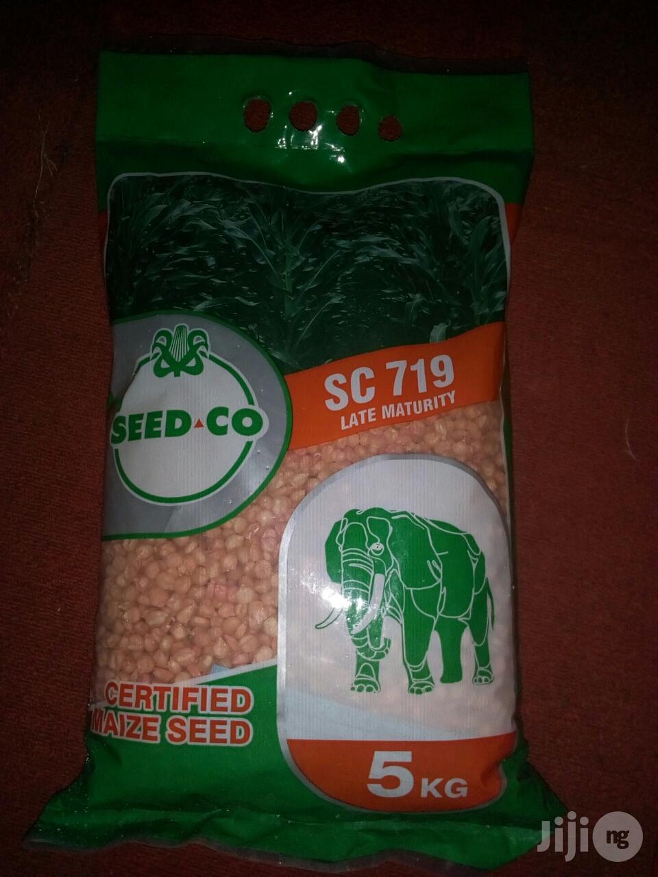 White Hybrid Corn Seed